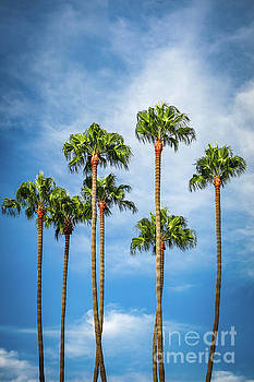 Palm Trees in San Diego by Leslie Banks