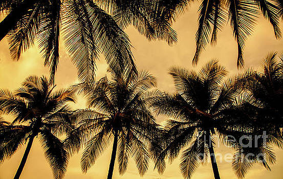 Palm Trees in Sunset by Iris Greenwell