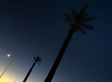 Palm trees in the early morning by Dirk Jung