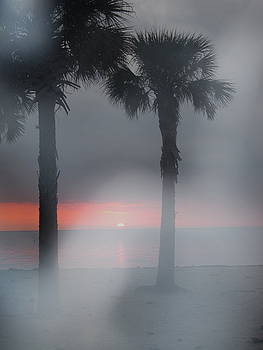 Palm Trees in the Fog by Penfield Hondros