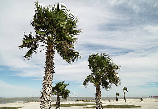 Palm Trees In The Wind by Bonnie Davidson