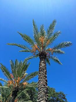 Palm Trees by Kay Gilley