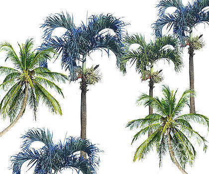 Palm Trees by Kelley Freel-Ebner