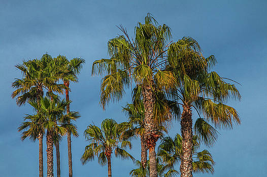 Randall Nyhof - Palm Trees on Laguna Beach in California