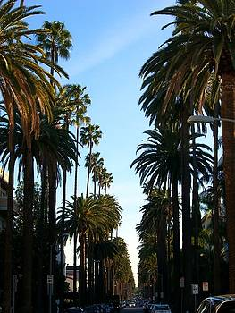 Palm trees on street by Sin Lanchester