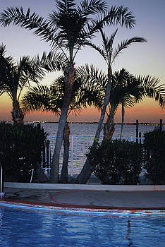 Palm Trees On The Bay by Charles Bacon Jr