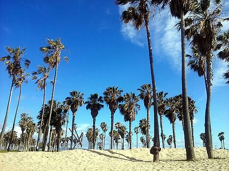 Palm Trees on Venice Beach by Sin Lanchester
