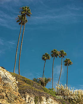 Palm Trees by Steven Natanson
