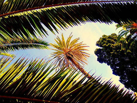 Palm trees by Ted Hebbler