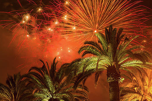 Palm Trees with Fireworks by Bonnie Follett