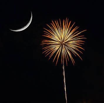 Palmetto Fireworks 2 by David Palmer