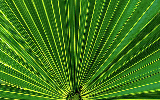 Palmetto by Robert Mitchell
