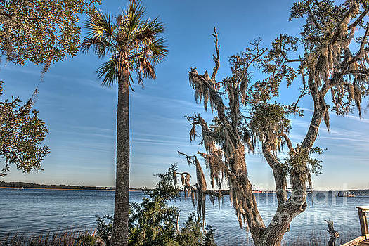 Dale Powell - Palmetto State View