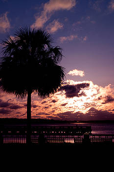 Palmetto Sunrise by Christine Buckley