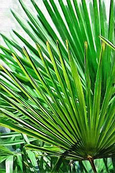 DONNA BENTLEY - Palms 2