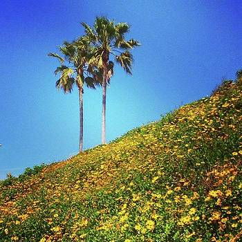 Palms And Daisies 🌴🌼 #carlsbad by Go Inspire Beauty