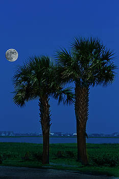 Palms and Moon at Morse Park by Bill Barber