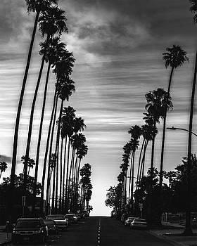 Palms by Art K