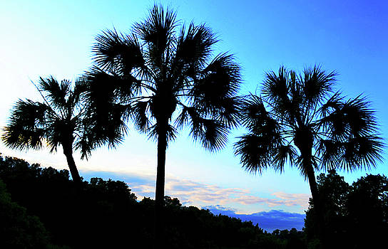 Palms At Dawn by Tammy  Shiver