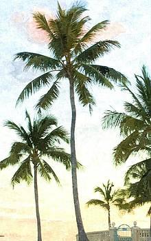 Palms at Dusk by Jennifer Capo