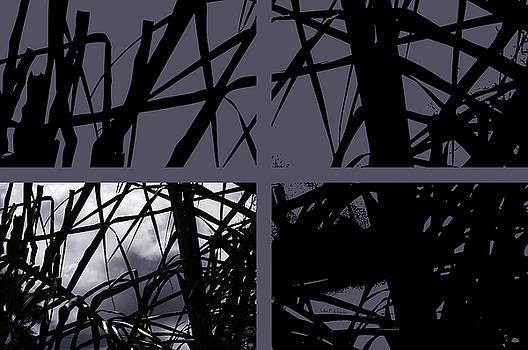 Palms at Night by John Knapko
