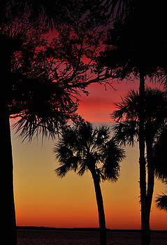 Palms at Sunset by Peter  McIntosh