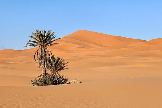 Palms in Desert by Aivar Mikko