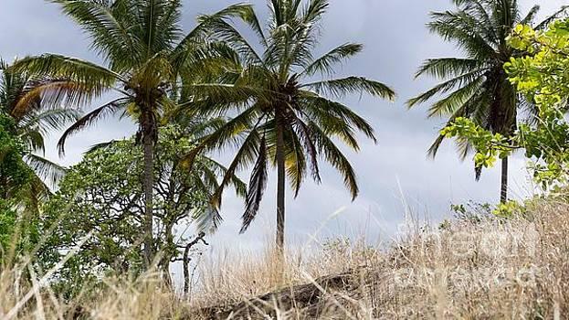 Palms by Mioara Andritoiu