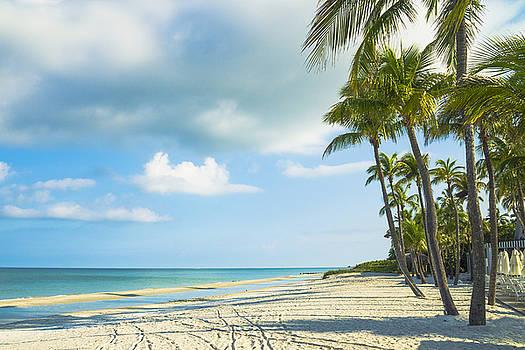 Palms on the Beach by Sean Allen