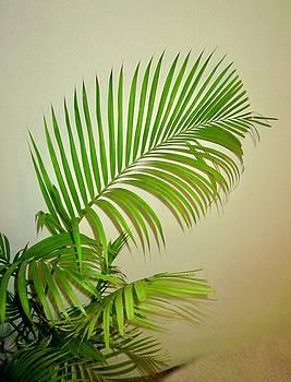 Palms by Shirley Kurian