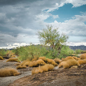Palo Verde Monsoon by Alexander Kunz