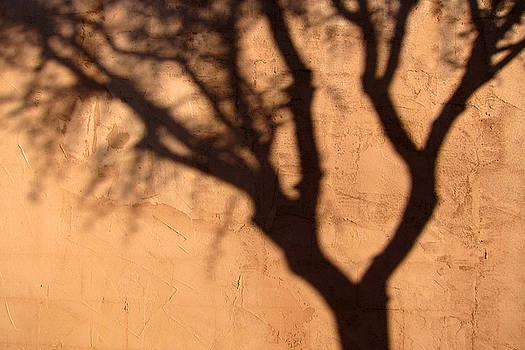 Palo verde shadow and Adobe by Robin Street-Morris