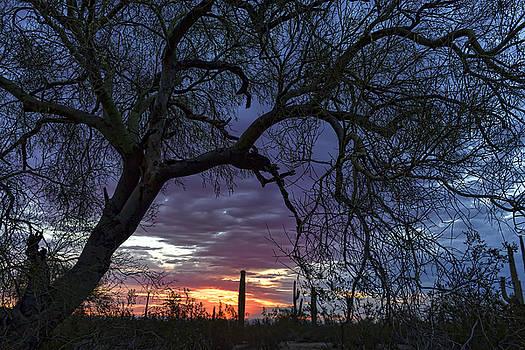 Palo Verde Sunrise by Ryan Seek