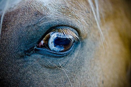 Palomino eye by Jesska Hoff