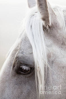 Palomino Forelock by Terri Cage