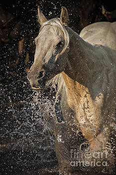 Palomino in Water by Terri Cage