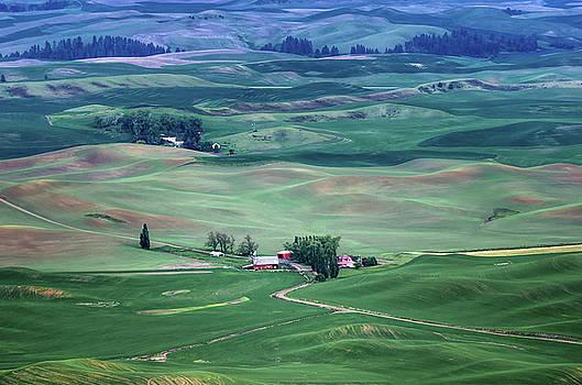Nikolyn McDonald - Palouse - Washington - Farms - 5