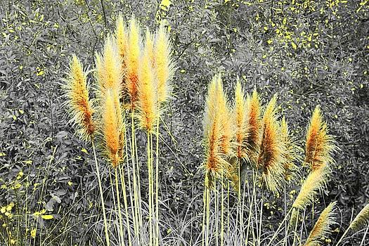 Pampas by Athala Carole Bruckner