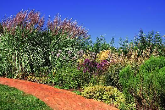 Jill Lang - Pampas Grass