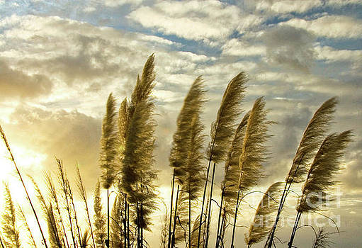 Pampas Grass by Julia Hiebaum