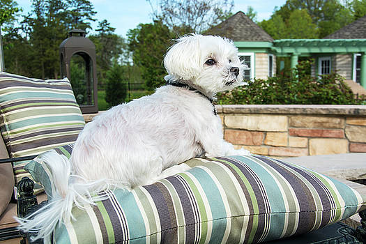 Pampered Pooch by Maggie Magee Molino