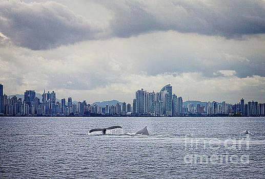Bob Hislop - Panama whales