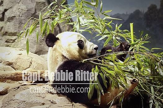 Panda 6072 by Captain Debbie Ritter