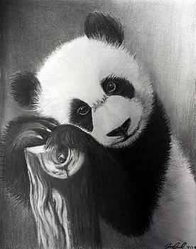 Panda Bear by Joanna Aud