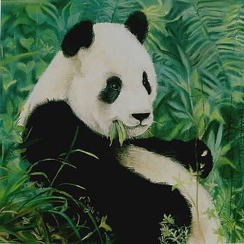 Panda by Candice Wright