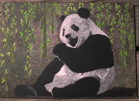 Panda by Chris Hedges