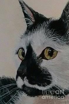 Panda Close-up by Linda Eversole