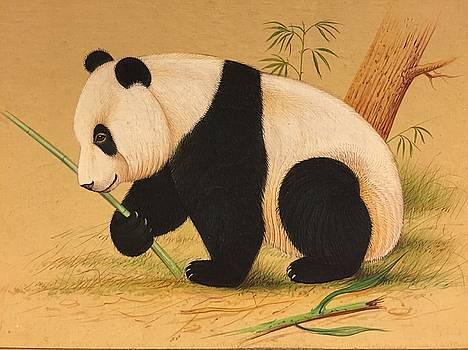 Panda in eating mood by Jai Singh