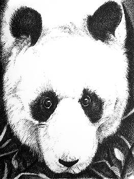 Panda Portrait by Matt Hood