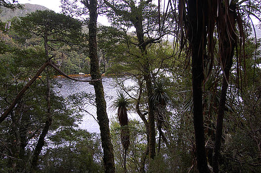 Pandani at Cradle Mountain by Sarah King